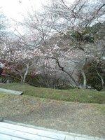四季桜7.JPG